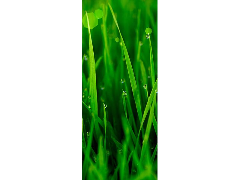 Türtapete Gras mit Morgentau