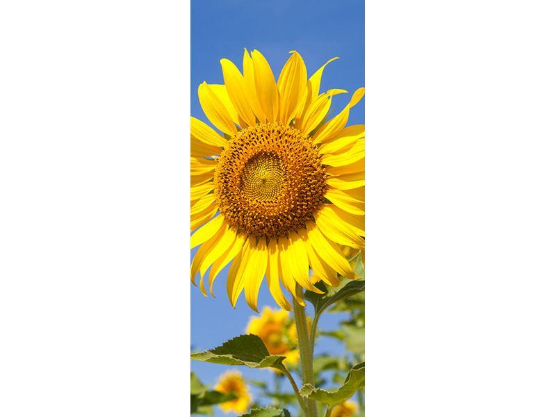 Türtapete Himmlische Sonnenblumen