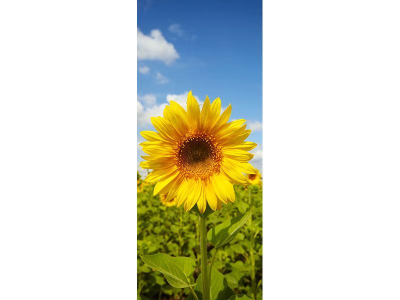 Türtapete Sommer-Sonnenblumen