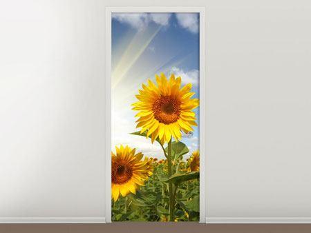 Türtapete Sonnenblumen im Sonnenlicht