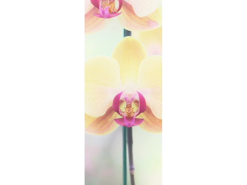 Türtapete Lovely Orchidee