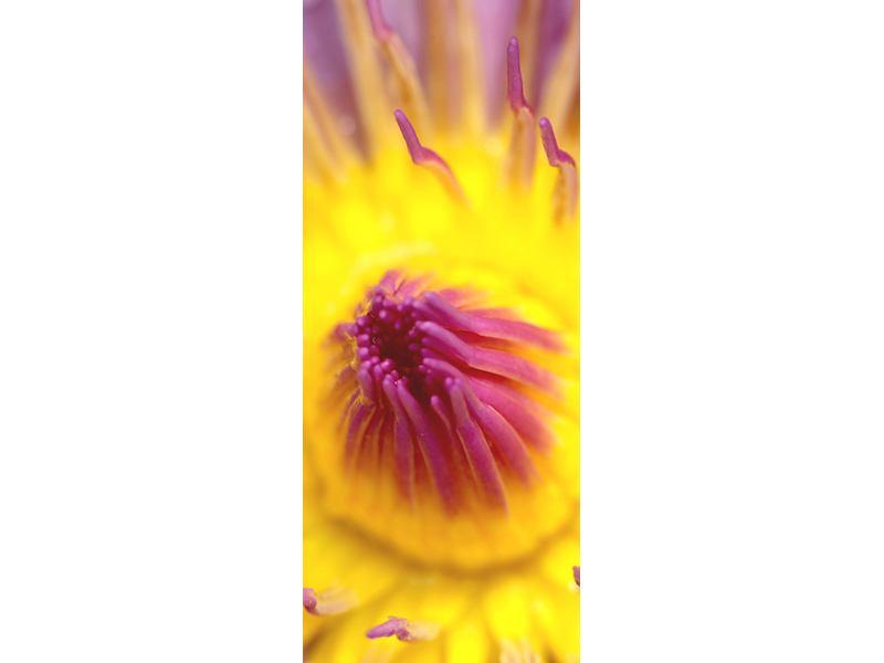 Türtapete XXL-Lotus