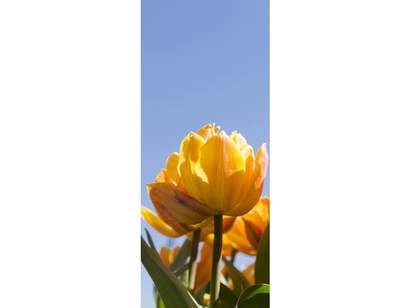Türtapete Märchenhafte Tulpen