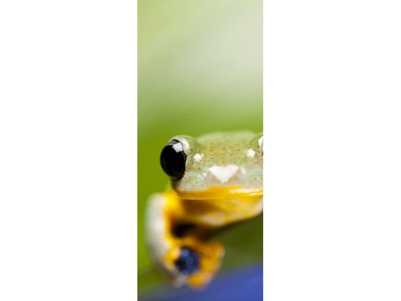 Türtapete Frosch XXL