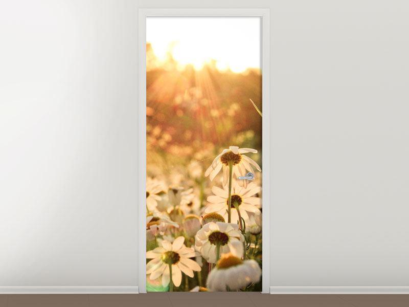 Türtapete Gänseblümchen bei Sonnenuntergang