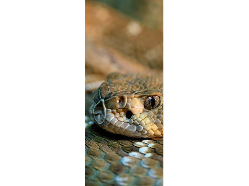 Türtapete Viper