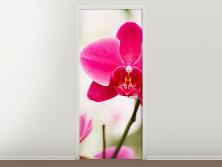 Türtapete Perspektivische Orchideen