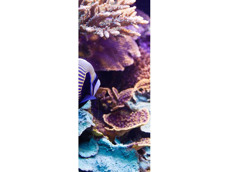Türtapete Faszination Unterwasser