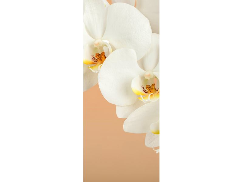 Türtapete Weisse Orchideenblüten