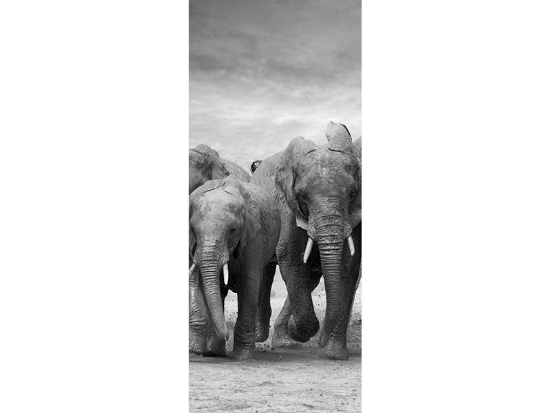 Türtapete Die Elefanten
