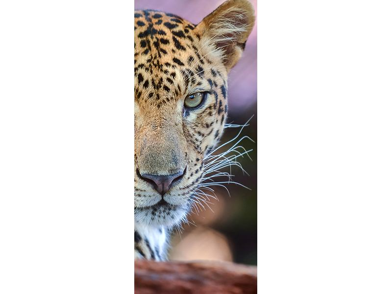 Türtapete Leopard