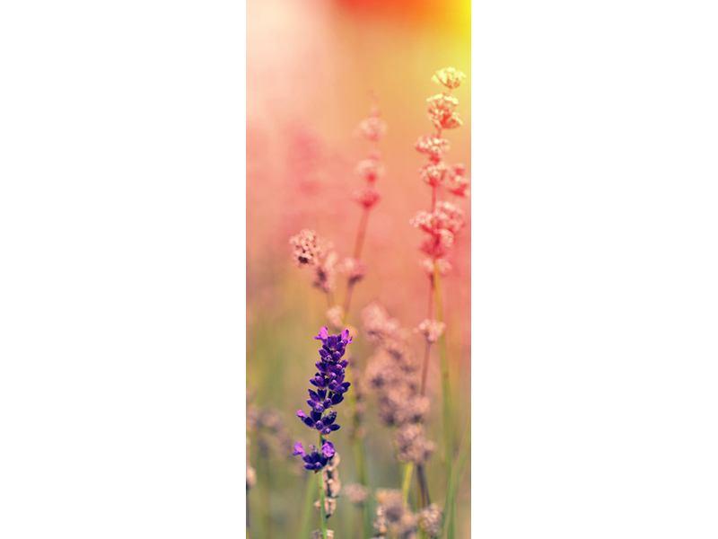 Türtapete Der Lavendel
