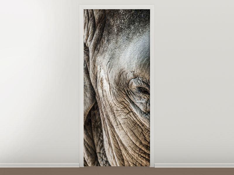 Türtapete Close Up Elefant