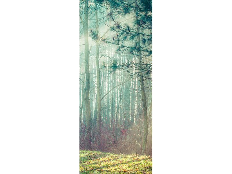 Türtapete Pinienwald