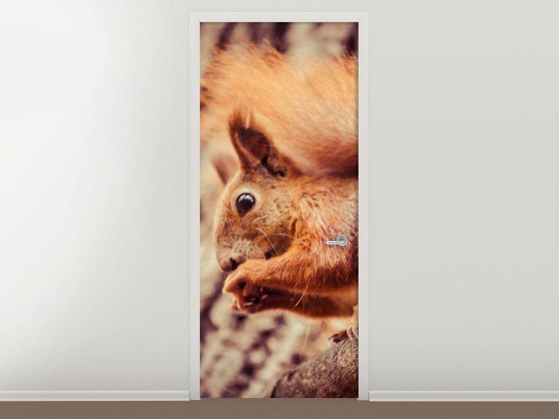 Türtapete Eichhörnchen