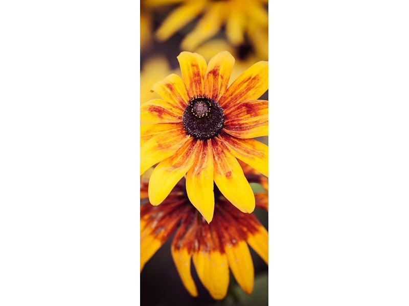Türtapete Fröhliche Blumen