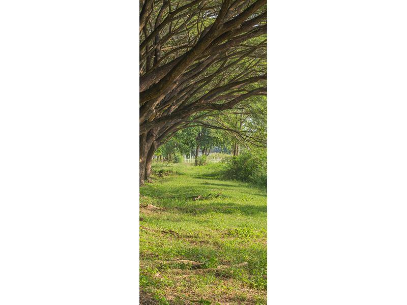 Türtapete Alter Baumbestand