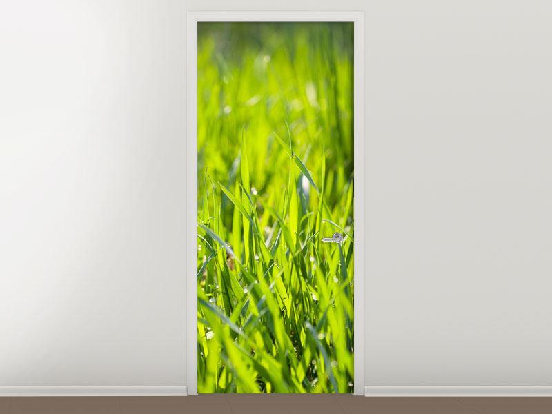 Türtapete Gras im Morgentau