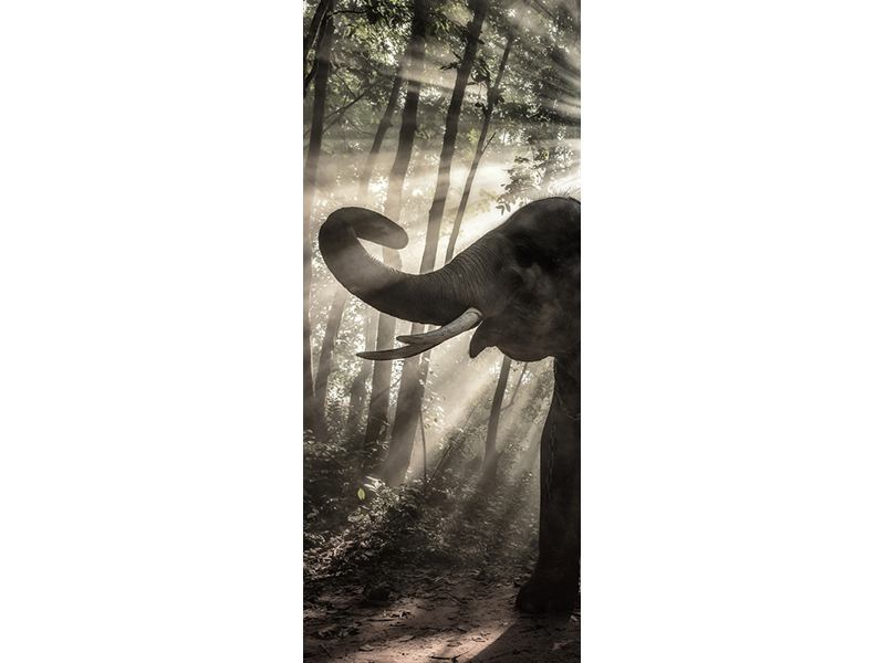 Türtapete Der Elefant