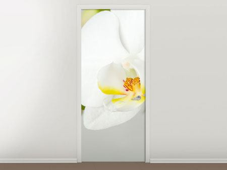 Türtapete Riesenorchidee