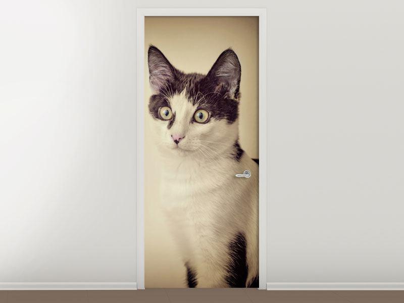 Türtapete Katze