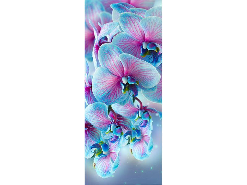 Türtapete Farbige Orchideen