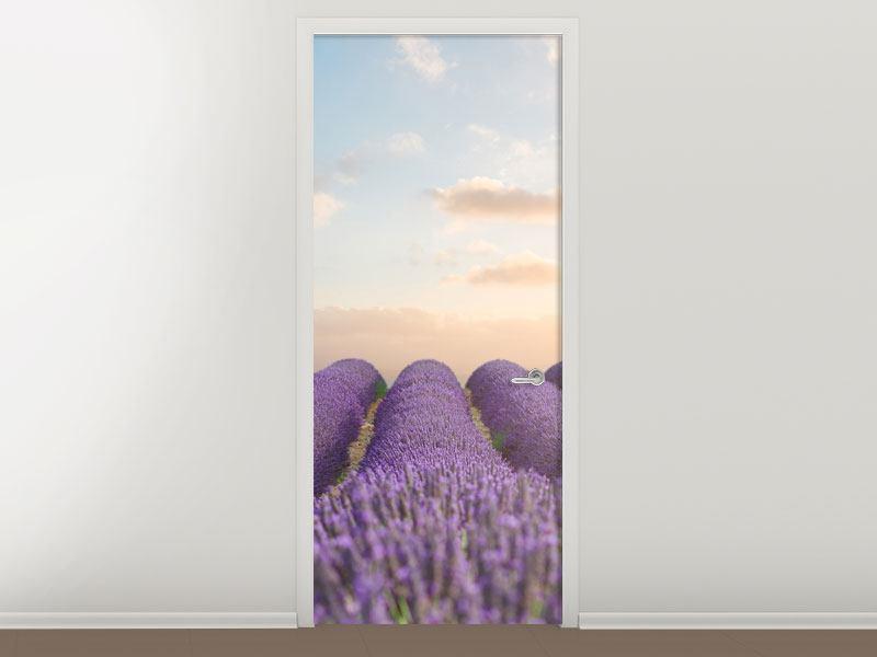 Türtapete Das blühende Lavendelfeld