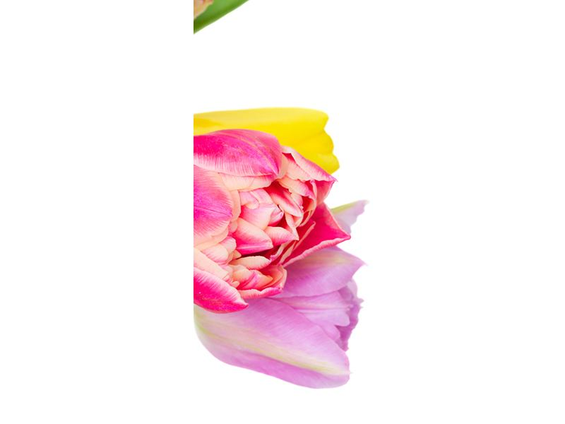 Türtapete Ein bunter Tulpenstrauss