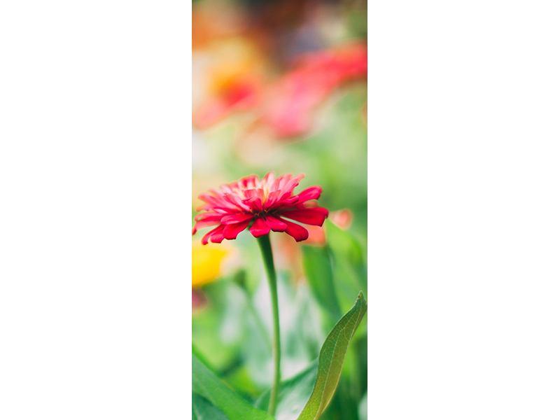 Türtapete Im Blumengarten