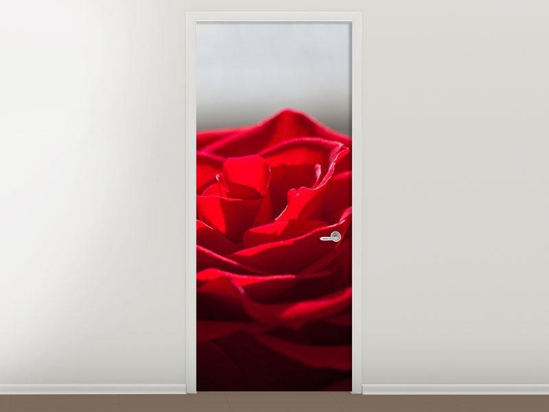 Türtapete Rote Rosenblüte