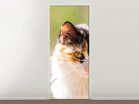 Türtapete Katzenbesuch