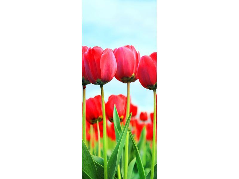 Türtapete Rote Tulpen