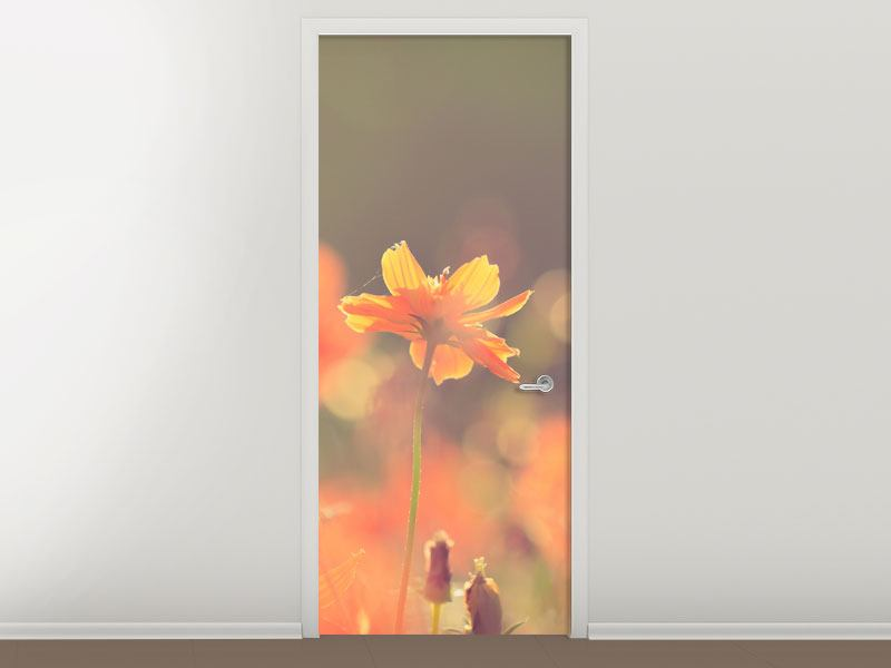 Türtapete Blütenpracht