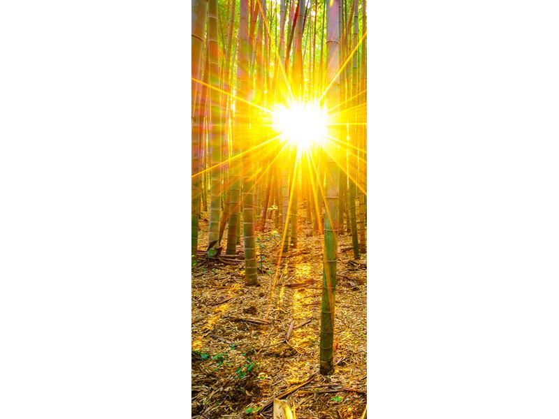 Türtapete Bambusse