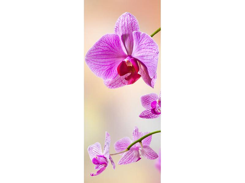 Türtapete Romantische Orchideen