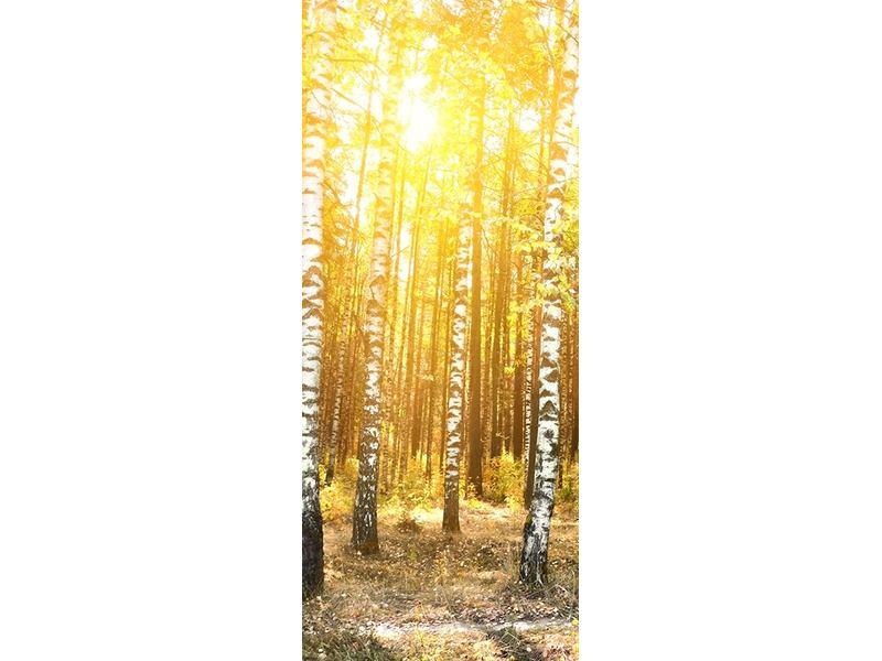 Türtapete Birkenwald