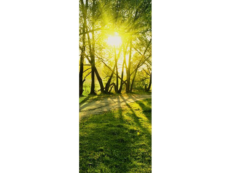 Türtapete Waldweg im Sonnenlicht