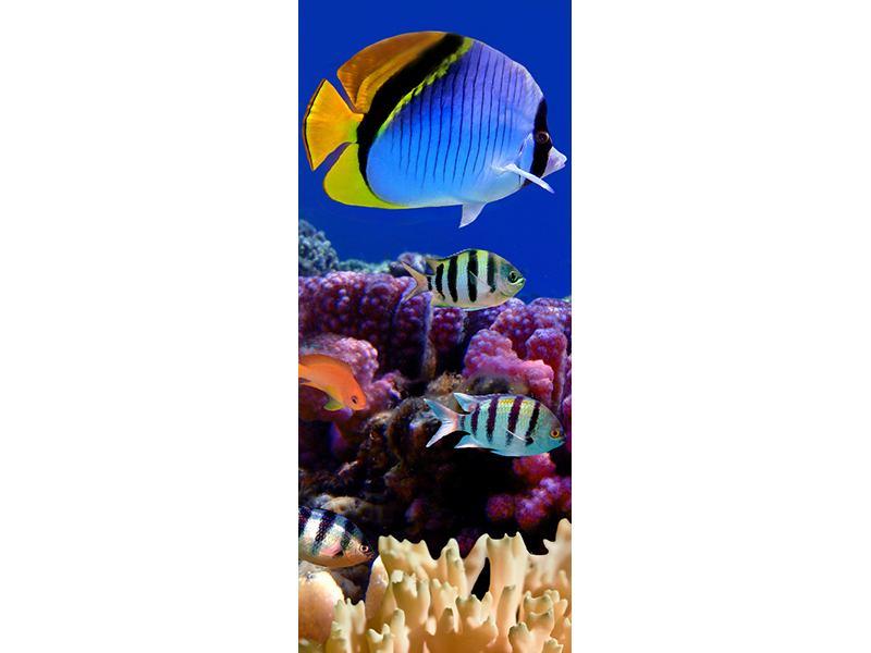 Türtapete Welt der Fische