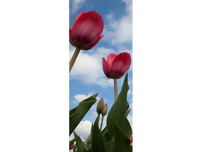 Türtapete Tulpen im Himmel