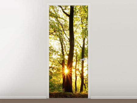 Türtapete Sonnenuntergang zwischen den Bäumen