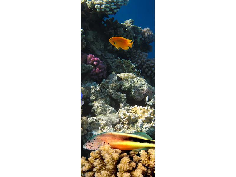 Türtapete Das Aquarium