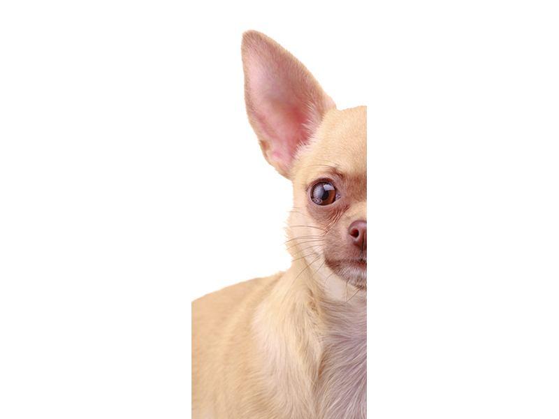 Türtapete Chihuahua