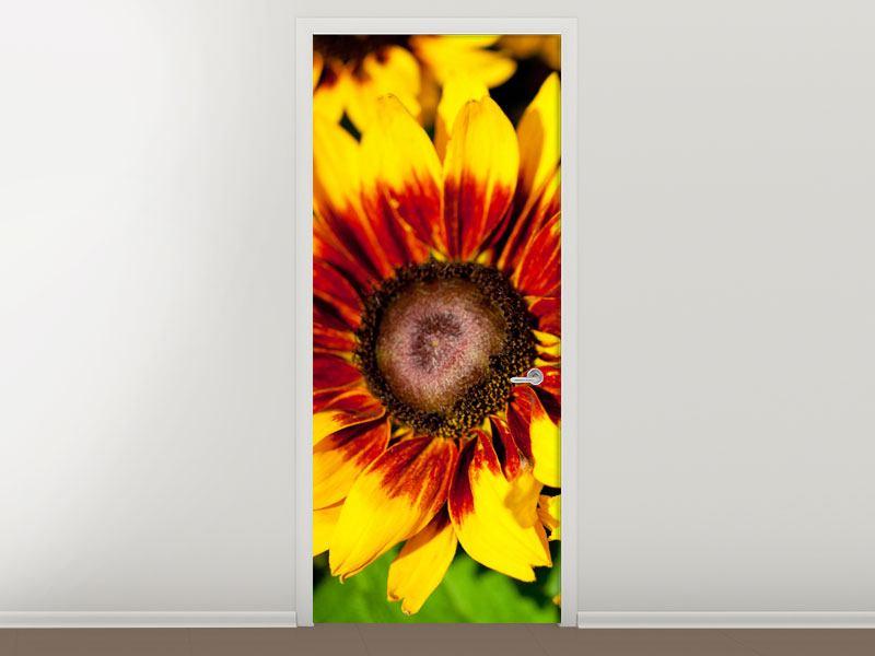 Türtapete Reife Sonnenblumen