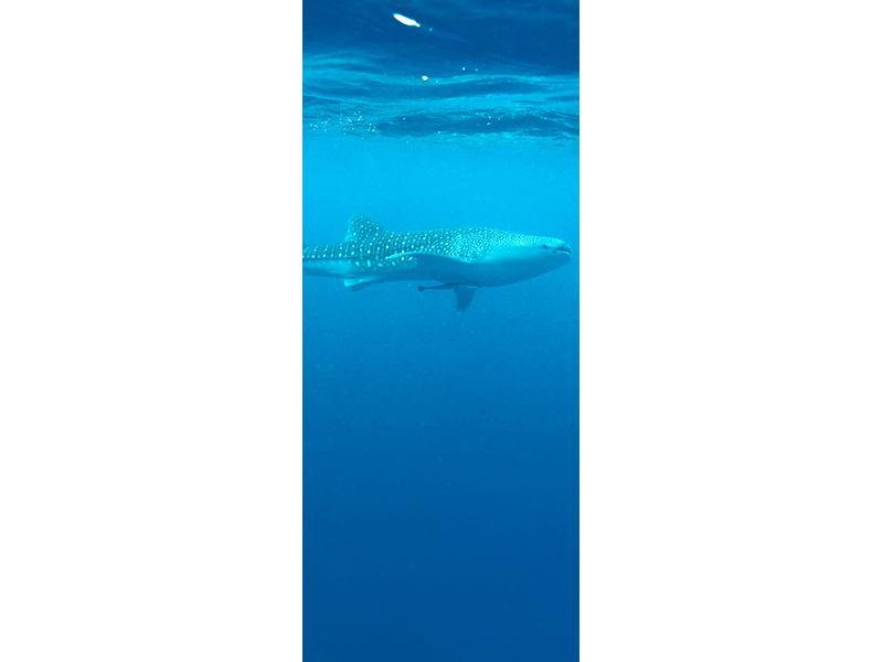 Türtapete Der Walhai