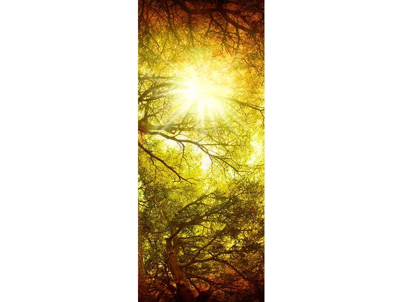 Türtapete Cedar Baum
