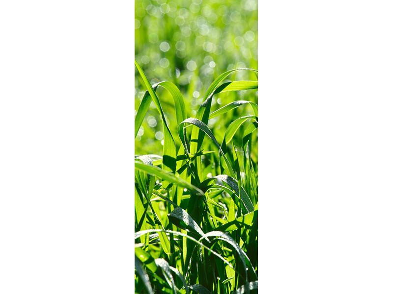 Türtapete Sonniges Gras