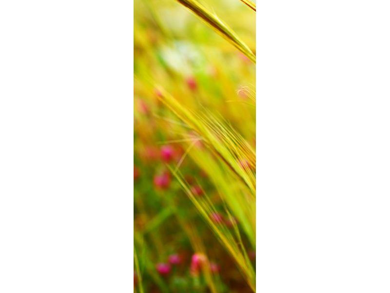 Türtapete Das Weizenfeld