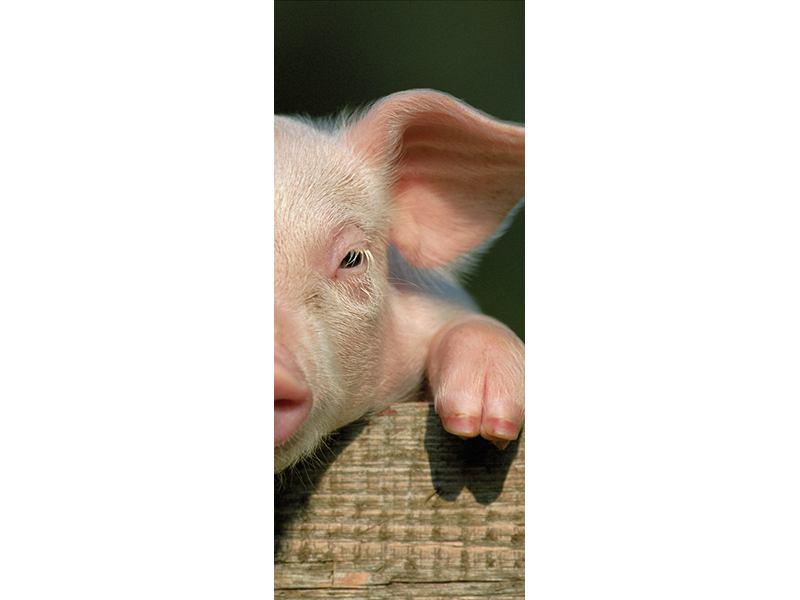 Türtapete Schweinchen Namens Babe