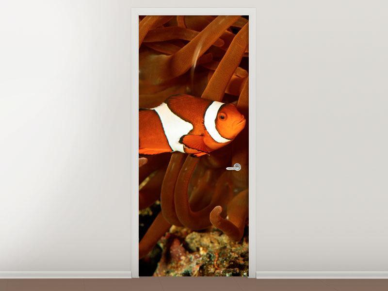 Türtapete Nemo