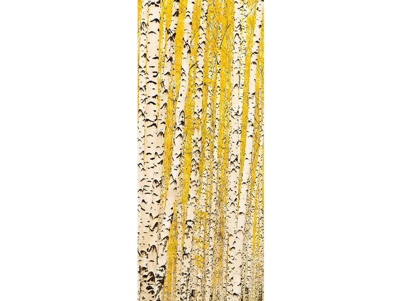 Türtapete Der Birkenwald im Herbst